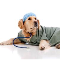 Una zampa sul cuore. Scopri la Pet Therapy con Lillo